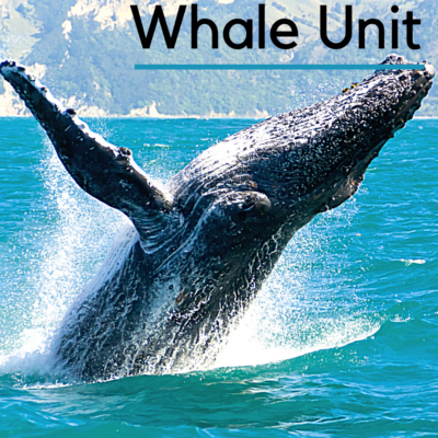 Jonah and the Whale Unit Study