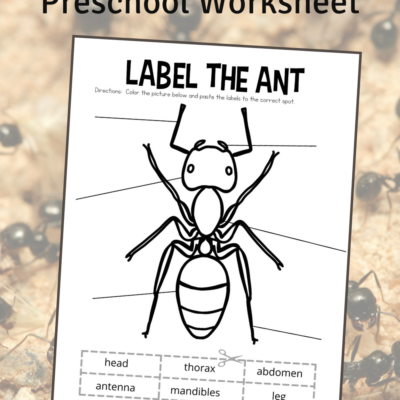Ant Body Parts Worksheet