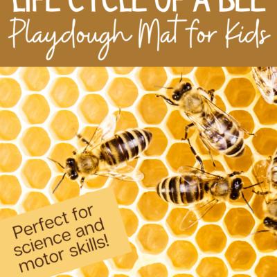 Bee Life Cycle Playdough Mat