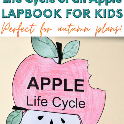 Life Cycle of an Apple Lapbook