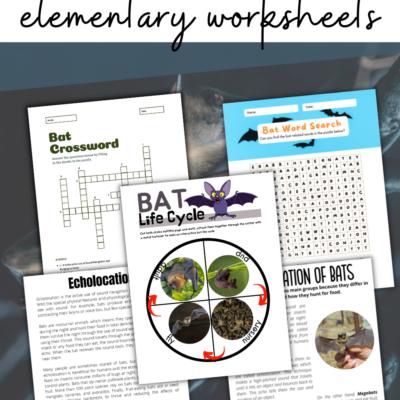 Bat Science Activities