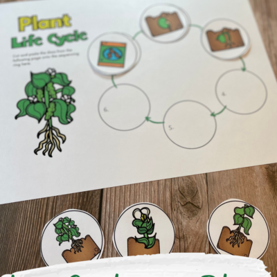 Life Cycle of a Plant Cut and Paste Worksheet