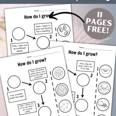 Life Cycle Cut and Paste Worksheets